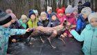 В Салтыковском парке поселилась лиса